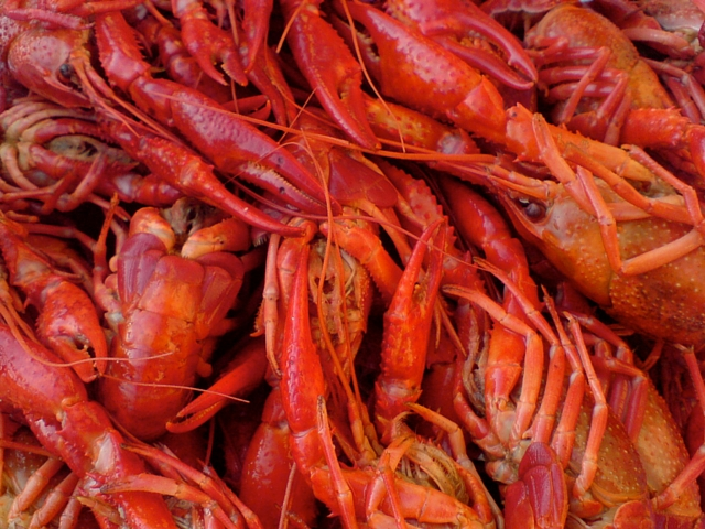 Read on to learn where to get boiled crawfish in the French Quarter. (Photo courtesy Karl Baron on Flickr)